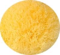 天然海綿スポンジ・ソフトシルク種の表面